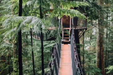 Treetop walk in Stanley Park in Vancouver, Canada