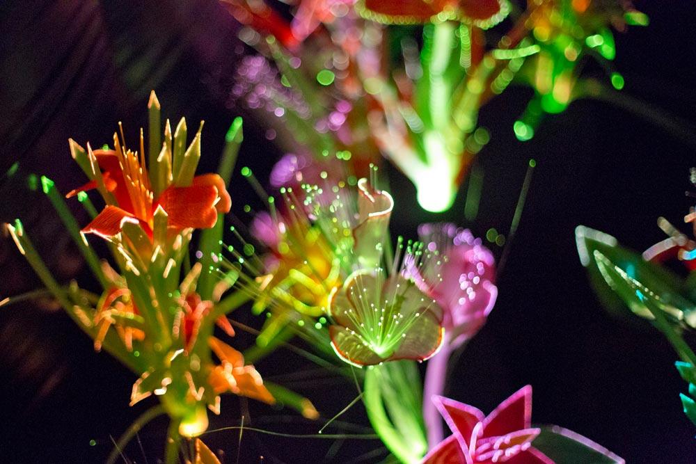 Joanna Vascocelo's Nighttime Garden