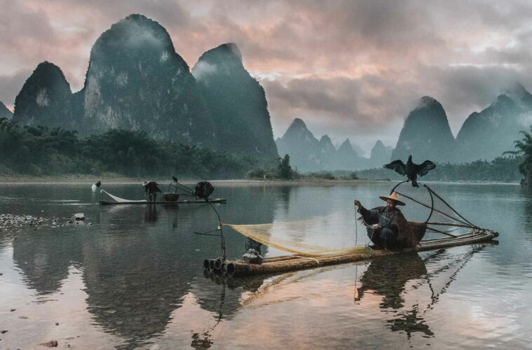 Cormorant fishing China