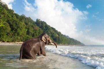 Havelock Island, Andaman Islands, India