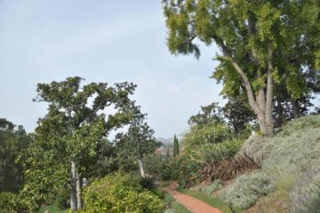 Virginia Robinson Gardens and Estate, Beverly Hills, Los Angeles, California, USA