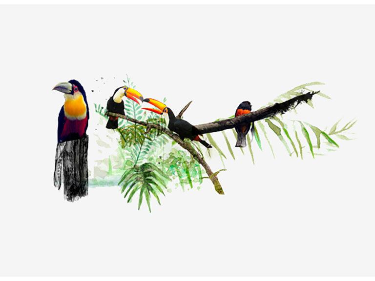 Awasi rainforest symphony