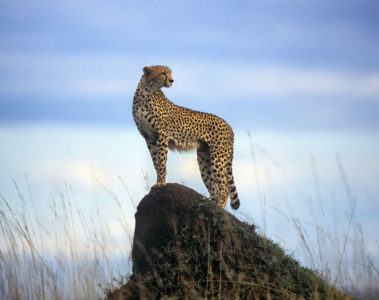 Cheetah plains offer exclusive-use villas, changing up the traditional safari-lodge concept