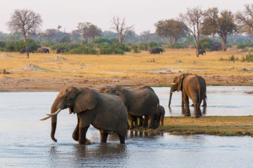 Elephants bathe in Hwange National Park, Zimbabwe, Africa. Photography by Sarah Kerr, courtesy of Wilderness Safaris