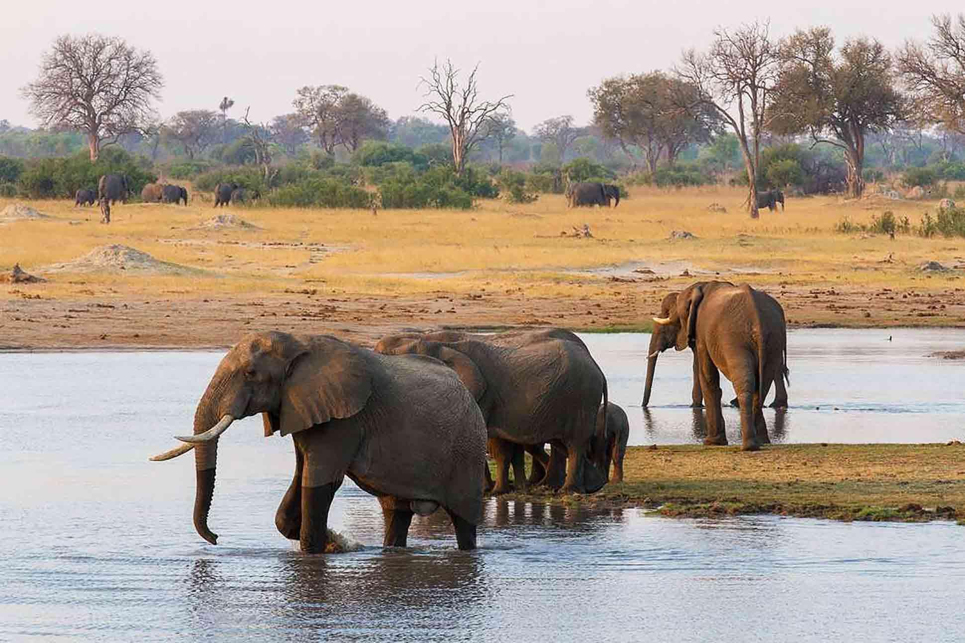 Elephants bathe in Hwange National Park, Zimbabwe, Africa. Photography by Sarah Kerr, courtesy of Wilderness Safaris