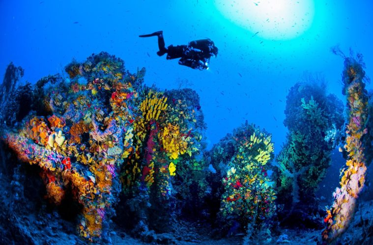 Malta is the world's second best dive site