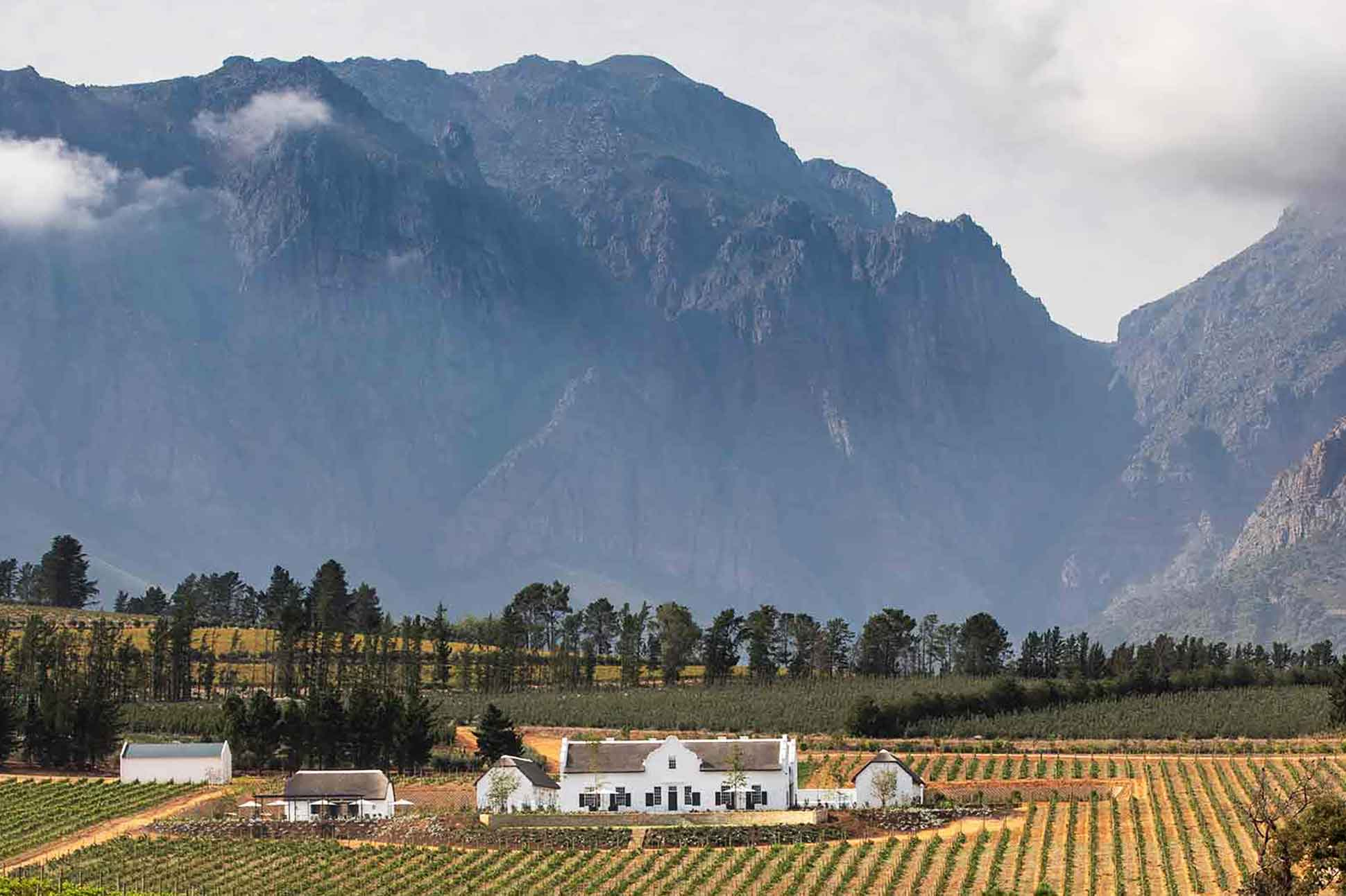 The taste of success <br> Paarl and Franschhoek, South Africa