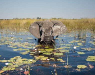 Elephants sighting, Belmond Safaris, Botswana, Africa