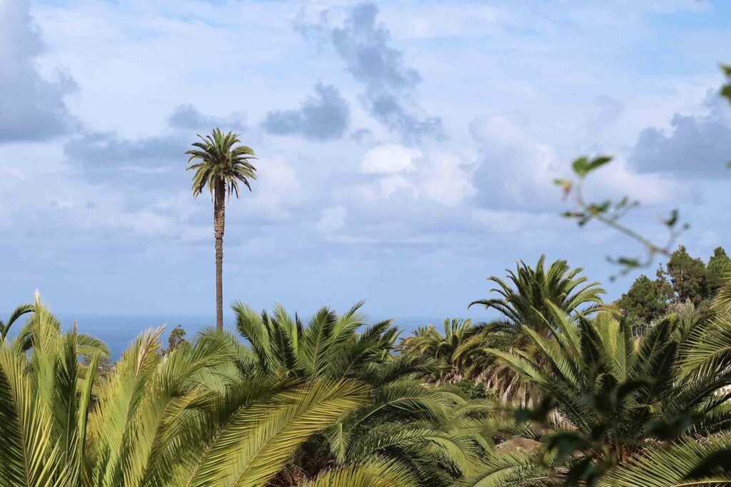 On land in the Canary Islands with G Adventures
