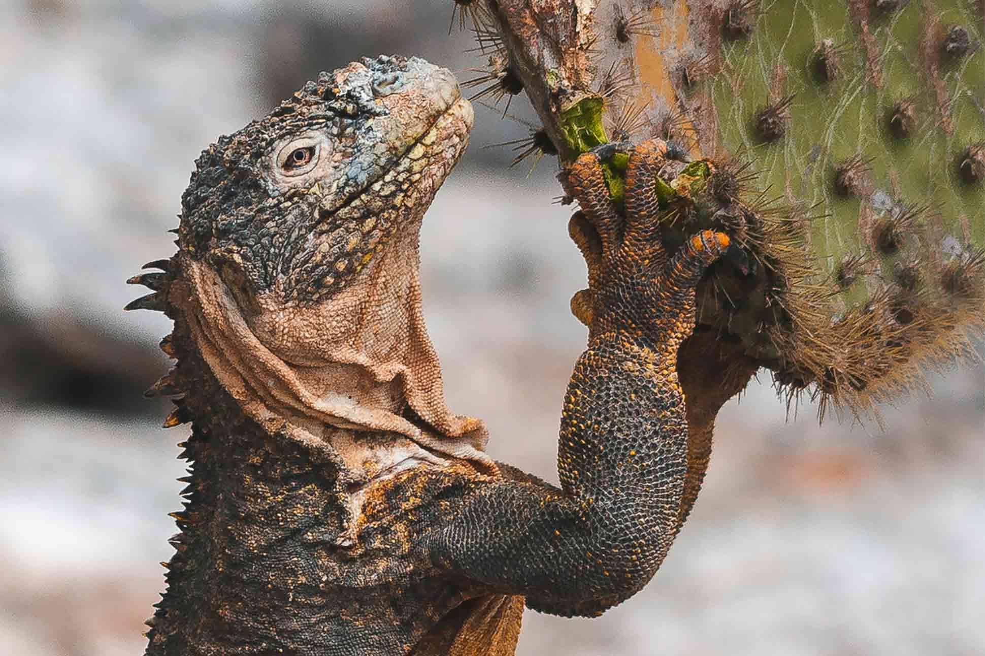 Natural selection <br> Galápagos Islands, Ecuador