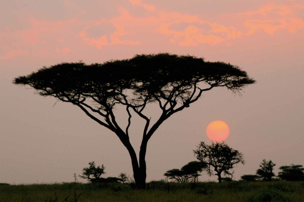 The sun sets over the savannah, Kenya, Africa