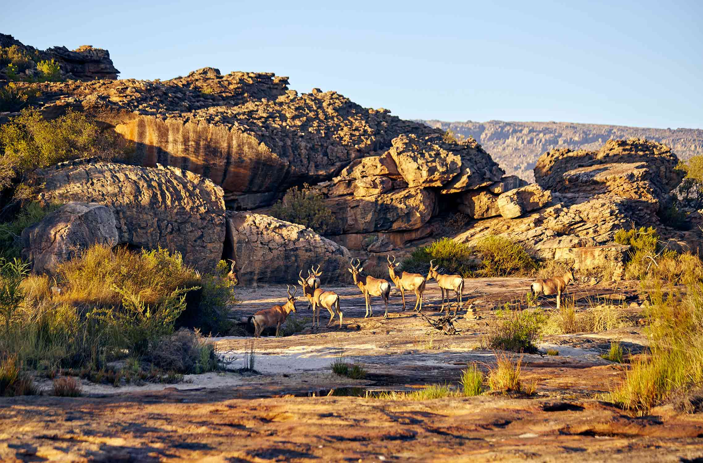 Land of our ancestors <br> Western Cape, South Africa