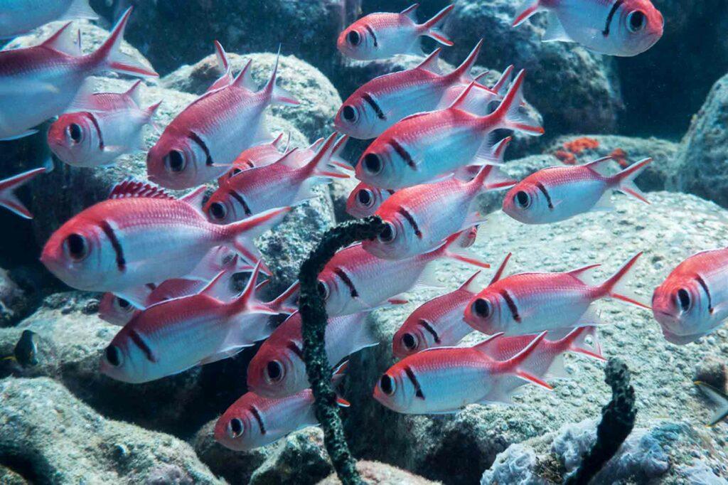 Windjammer Landing St Lucia Scuba Diving