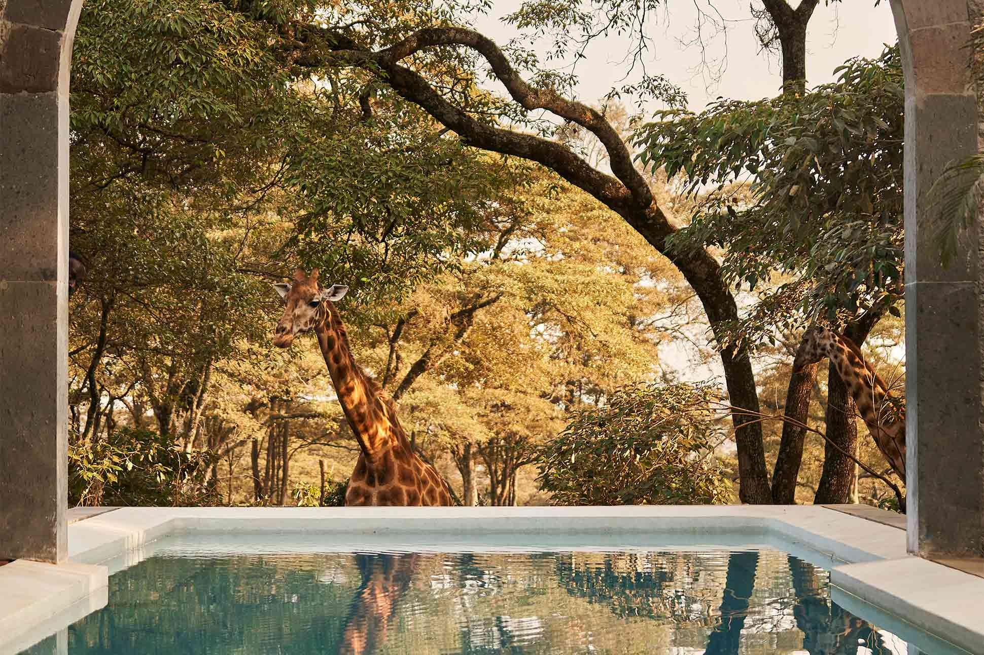 Giraffe Manor, The Safari Collection: <br> The retreat